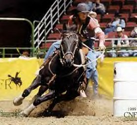 Black quarter horses barrel racing - photo#10