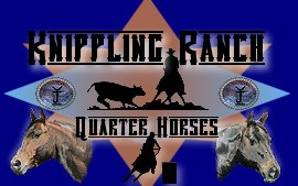 quarter horses for sale, quarter horse stallions, production sale, quarter horse breeders
